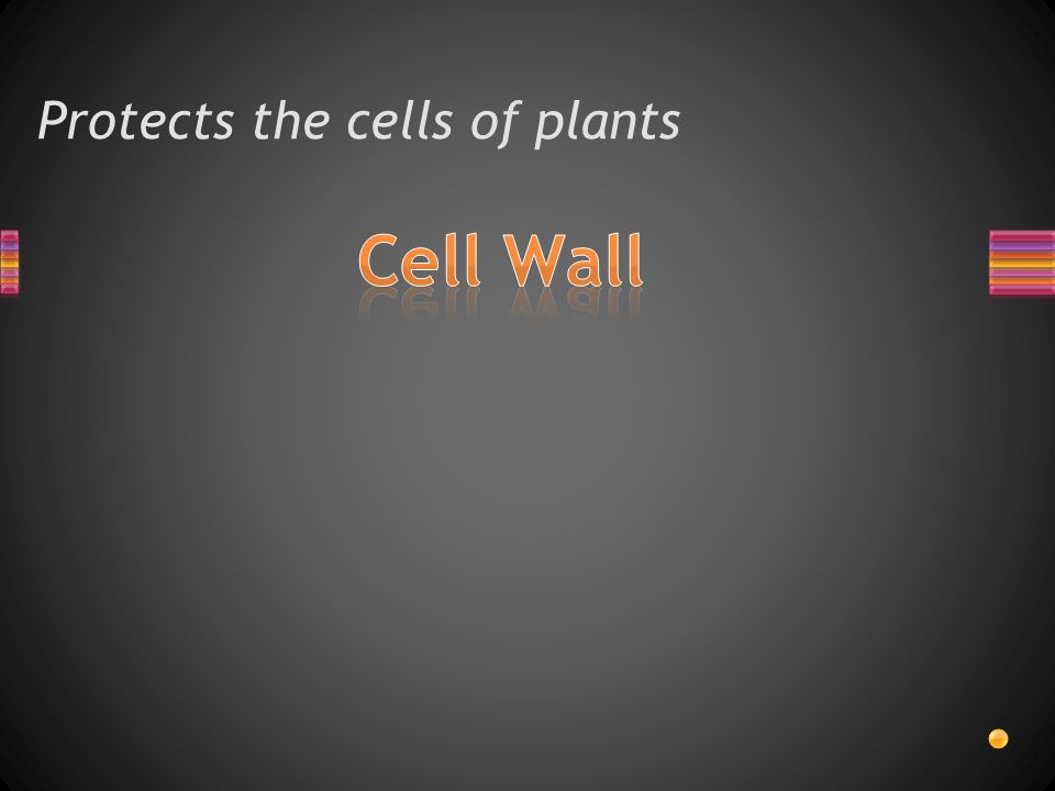 Protects the cells of plants