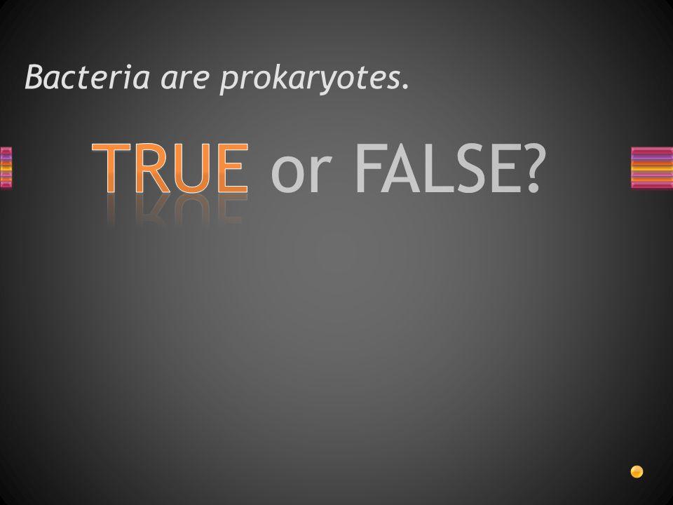 Bacteria are prokaryotes.