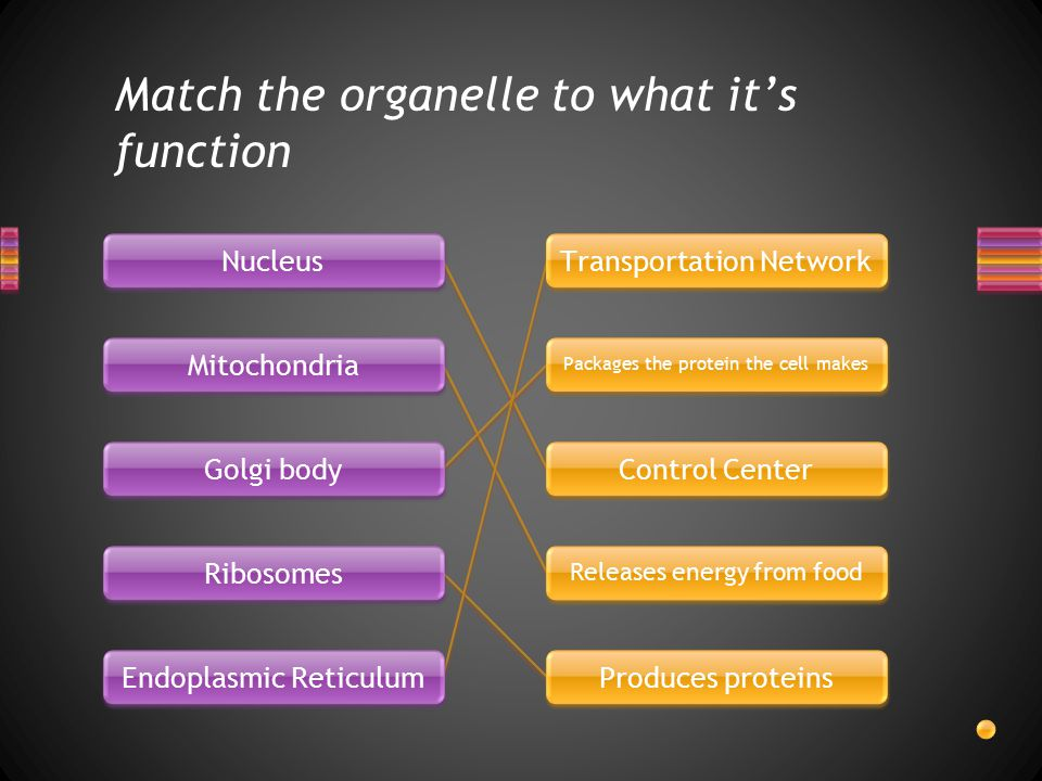 Match the organelle to what it's function