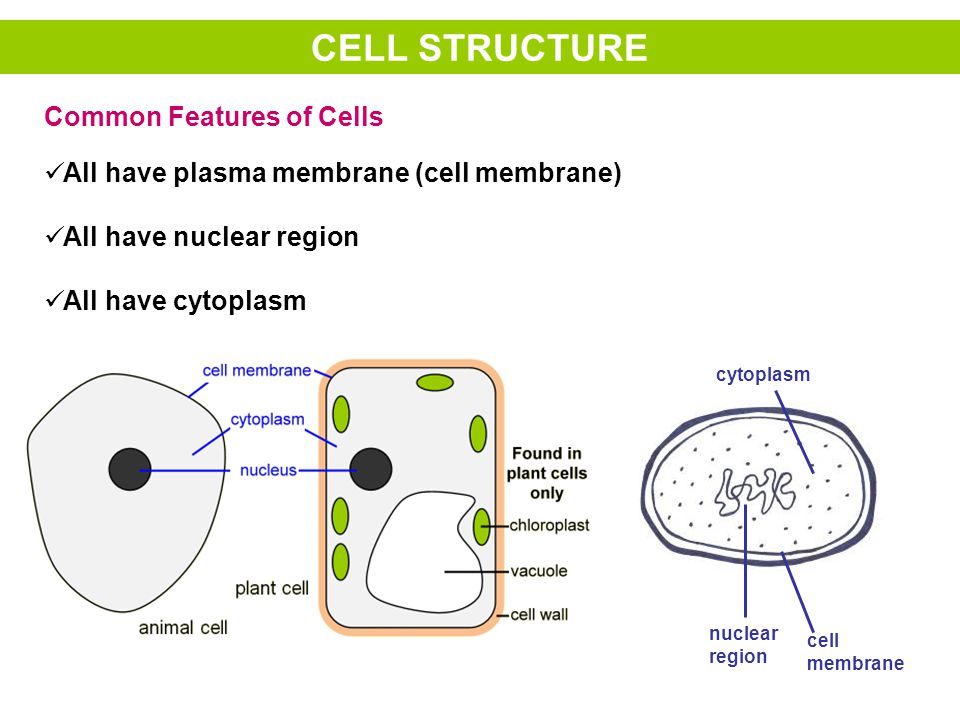 CELL STRUCTURE Common Features of Cells