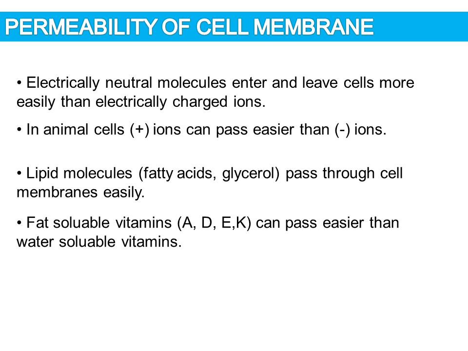 PERMEABILITY OF CELL MEMBRANE