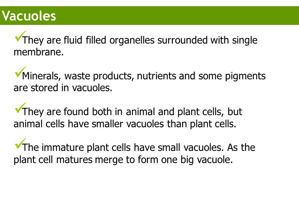 Vacuoles They are fluid filled organelles surrounded with single membrane.