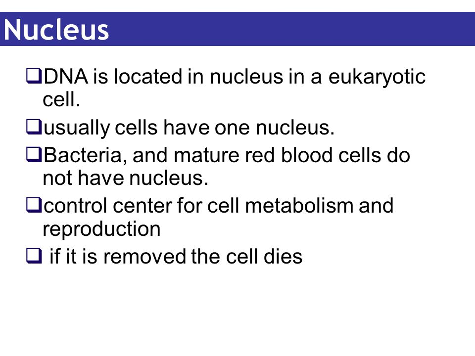Nucleus DNA is located in nucleus in a eukaryotic cell.