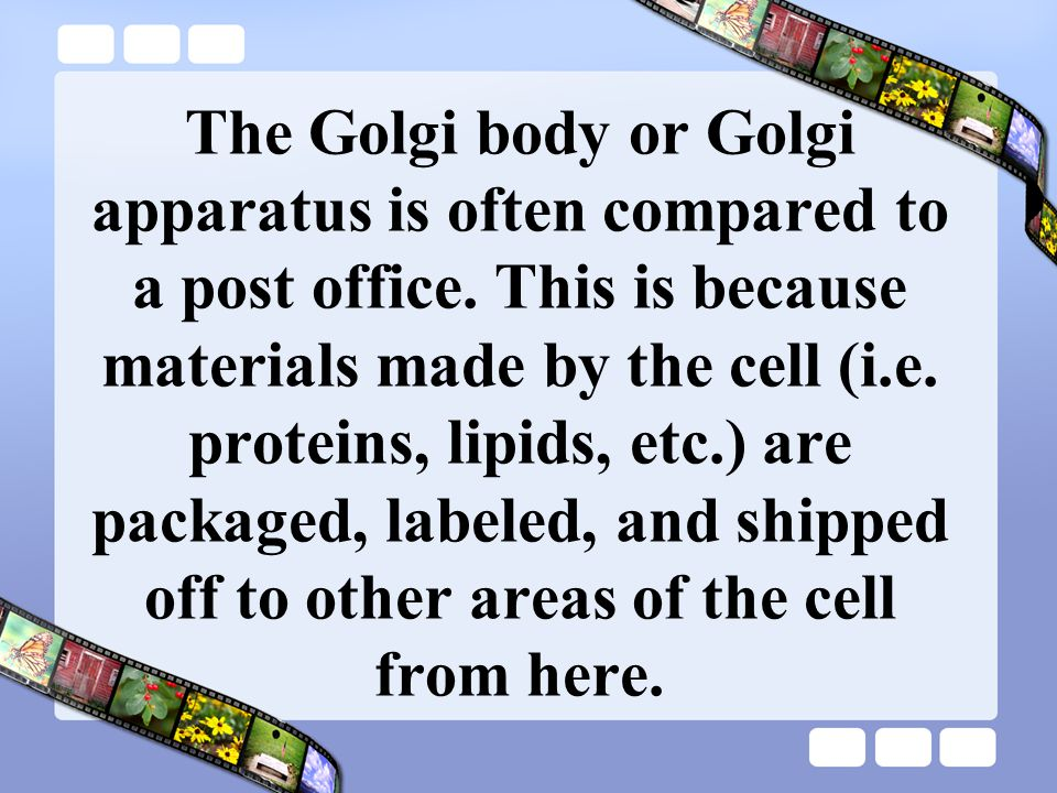 The Golgi body or Golgi apparatus is often compared to a post office