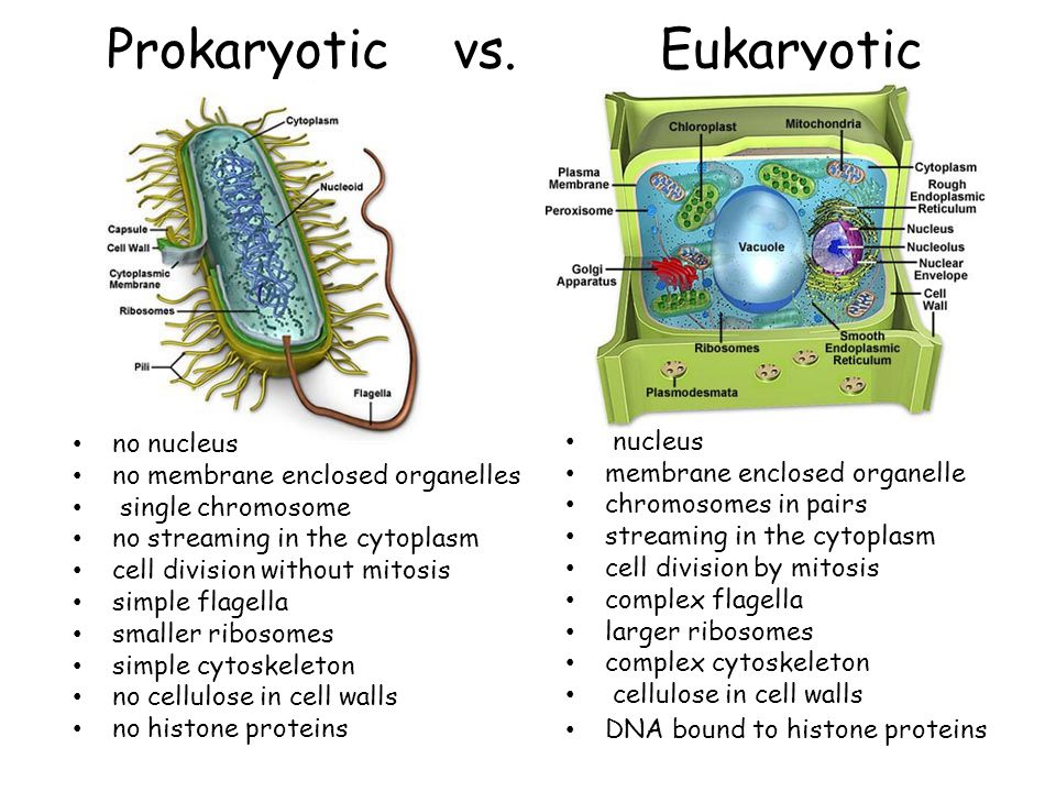 prokaryotic and eukaryotic chromosomes pdf