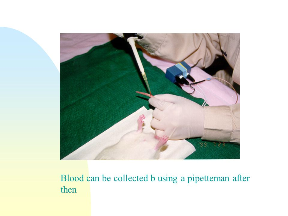 Blood can be collected b using a pipetteman after then