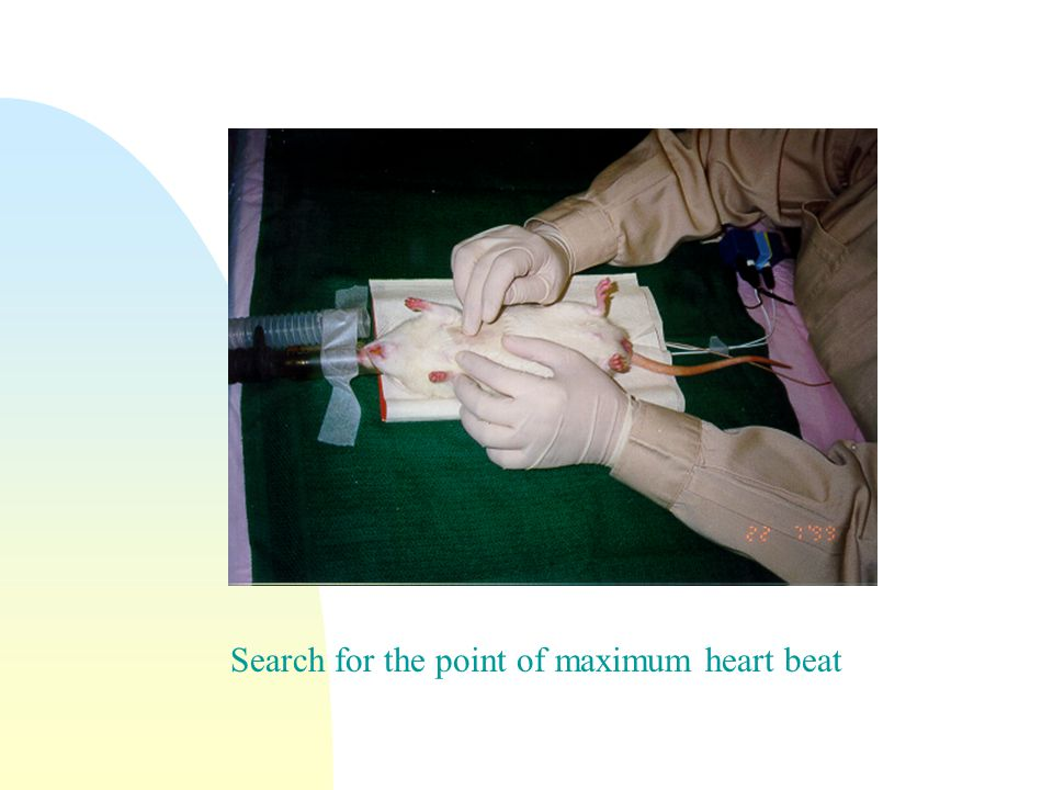Search for the point of maximum heart beat