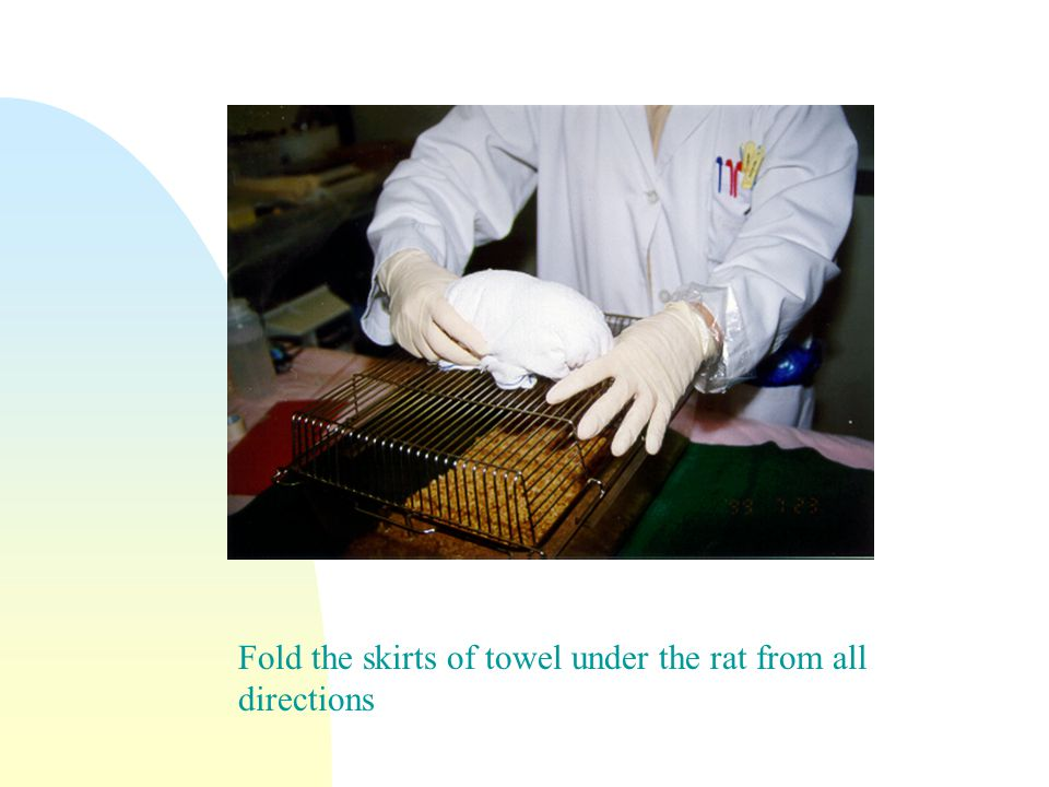 Fold the skirts of towel under the rat from all directions