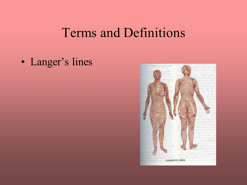 Terms and Definitions Langer's lines