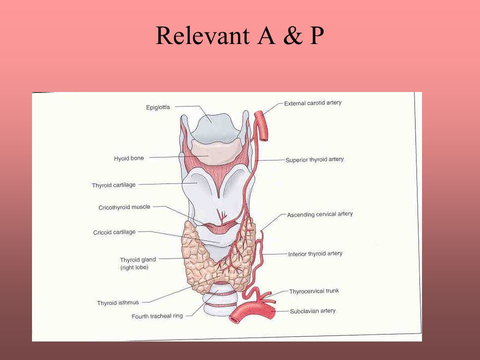 Relevant A & P The thyroid gland is part of the endocrine system and is essential in regulating the body s metabolism.