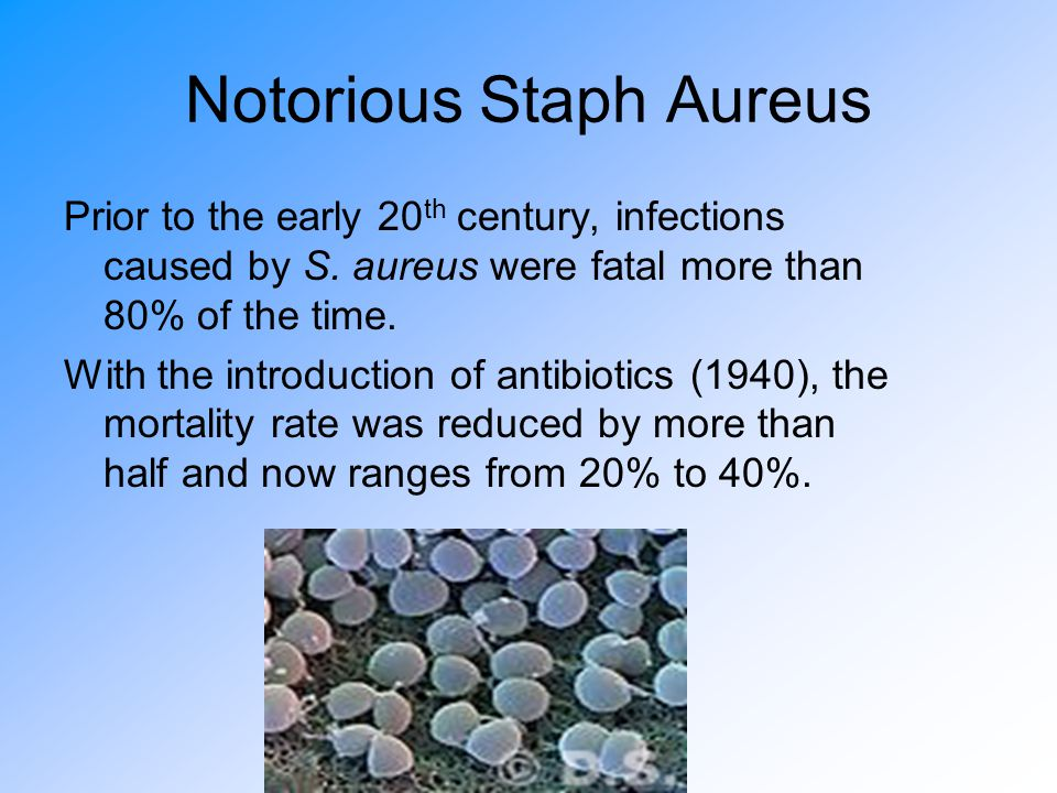 Notorious Staph Aureus