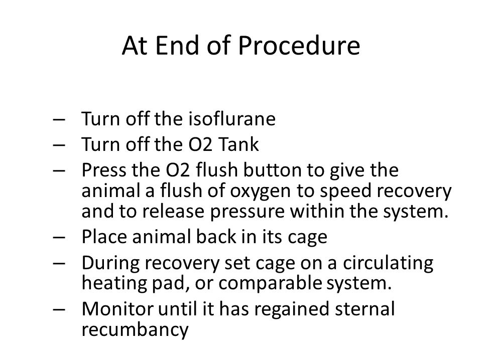 At End of Procedure Turn off the isoflurane Turn off the O2 Tank