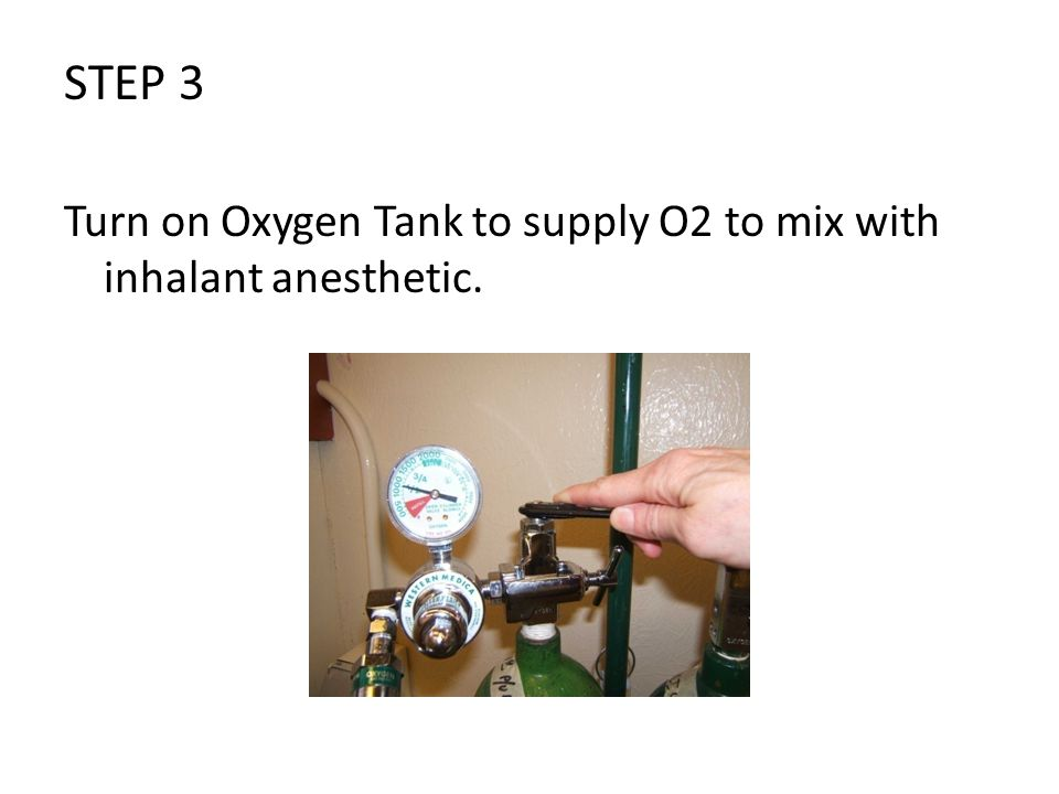 STEP 3 Turn on Oxygen Tank to supply O2 to mix with inhalant anesthetic.