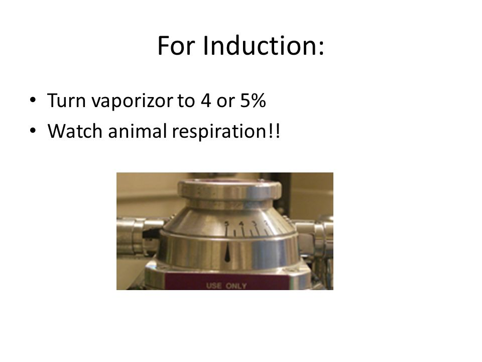For Induction: Turn vaporizor to 4 or 5% Watch animal respiration!!