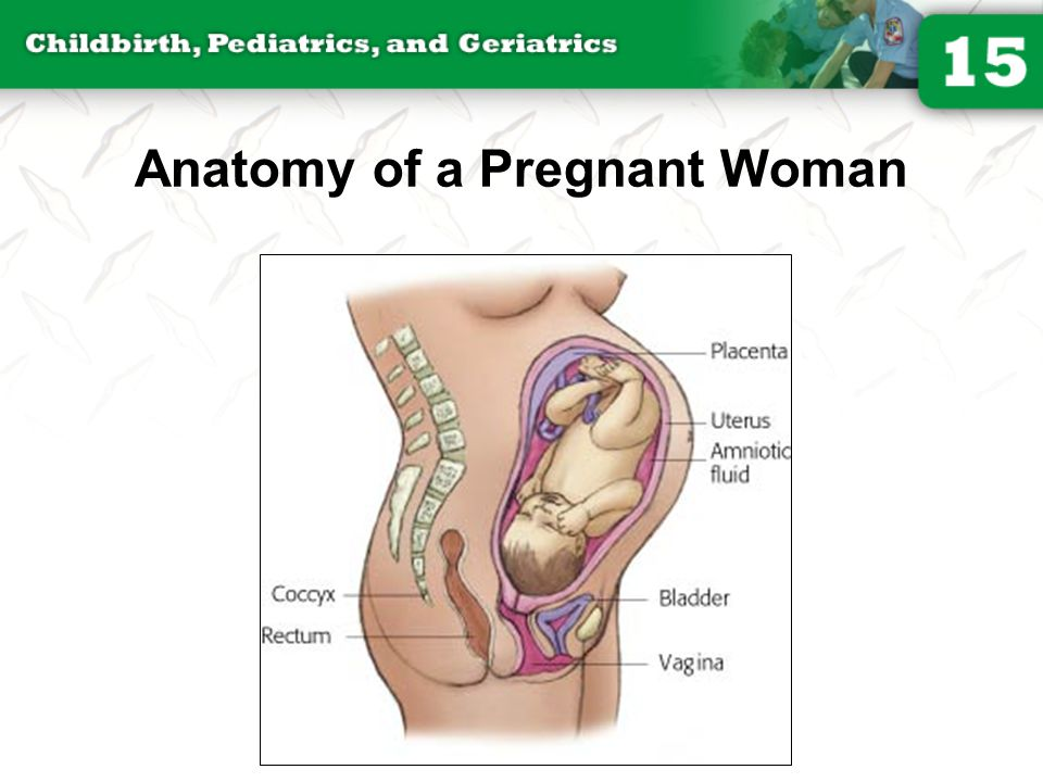 Anatomy of a Pregnant Woman