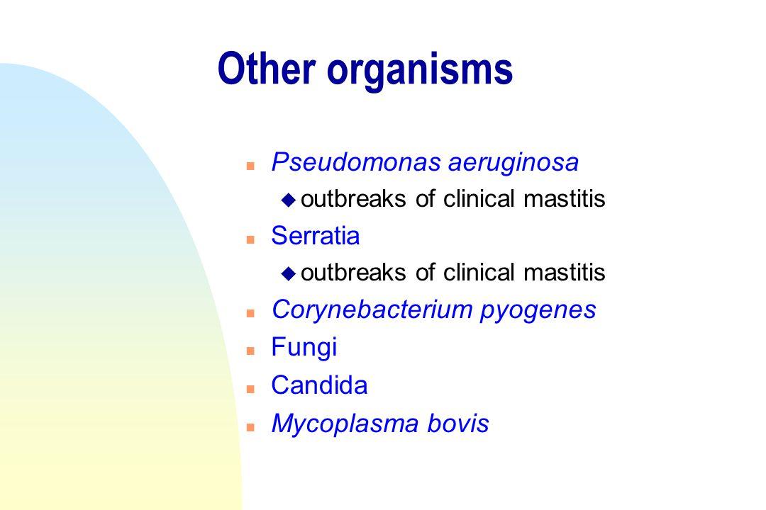 Other organisms Pseudomonas aeruginosa Serratia