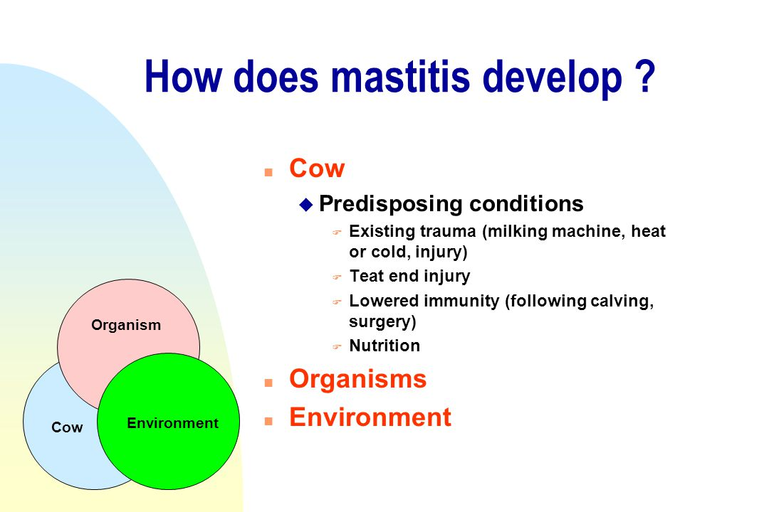 How does mastitis develop