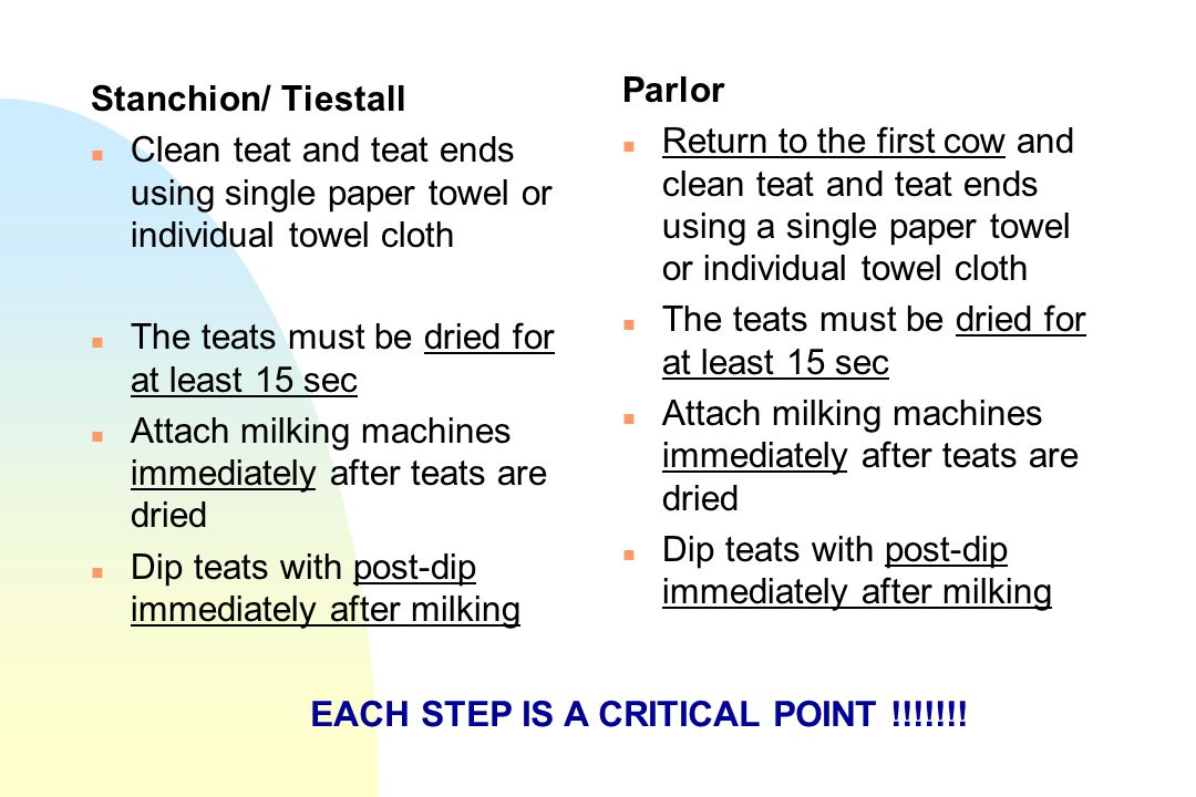 Parlor Return to the first cow and clean teat and teat ends using a single paper towel or individual towel cloth.