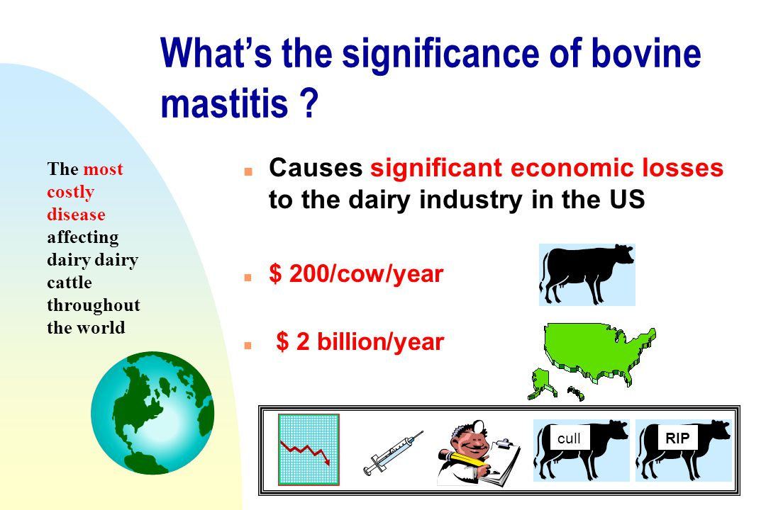 What's the significance of bovine mastitis