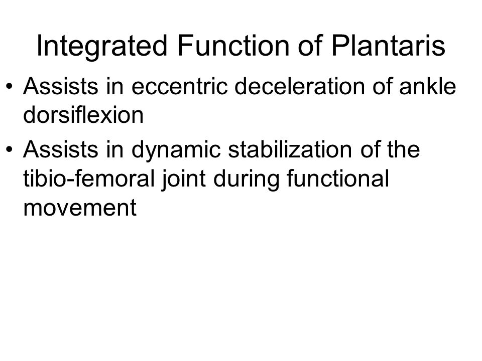 Integrated Function of Plantaris