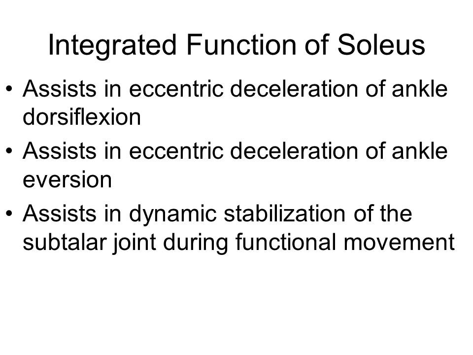 Integrated Function of Soleus