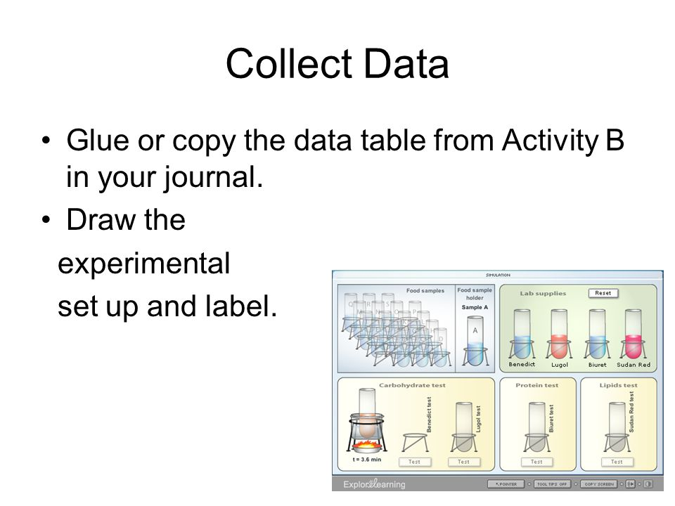 Collect Data Glue or copy the data table from Activity B in your journal. Draw the. experimental.