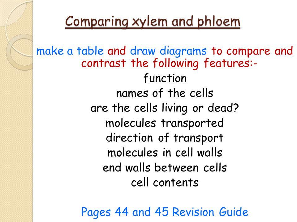 Comparing xylem and phloem