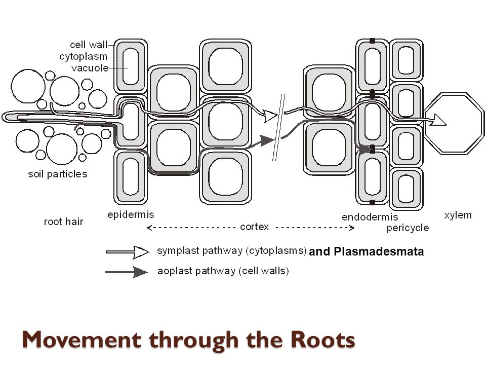 Movement through the Roots