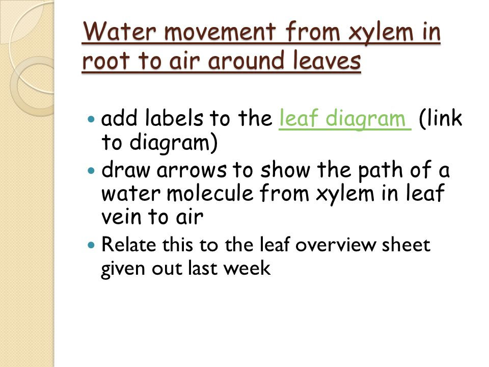 Water movement from xylem in root to air around leaves