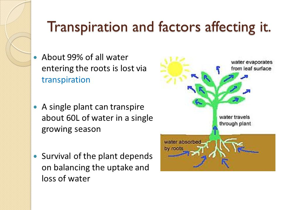 Transpiration and factors affecting it.