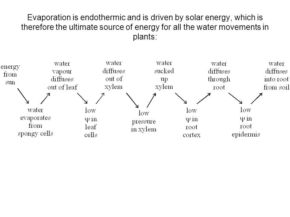 factors effecting transpiration rates What factors affect plant transpiration  this is because different plants will transpire water more quickly than others, or at different rates.
