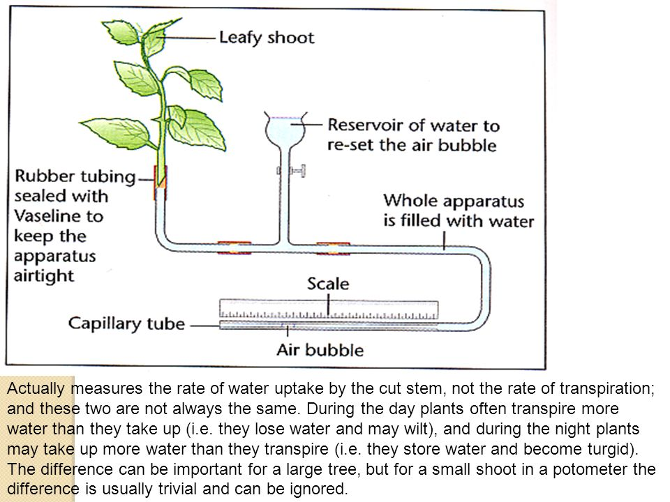Actually measures the rate of water uptake by the cut stem, not the rate of transpiration; and these two are not always the same.