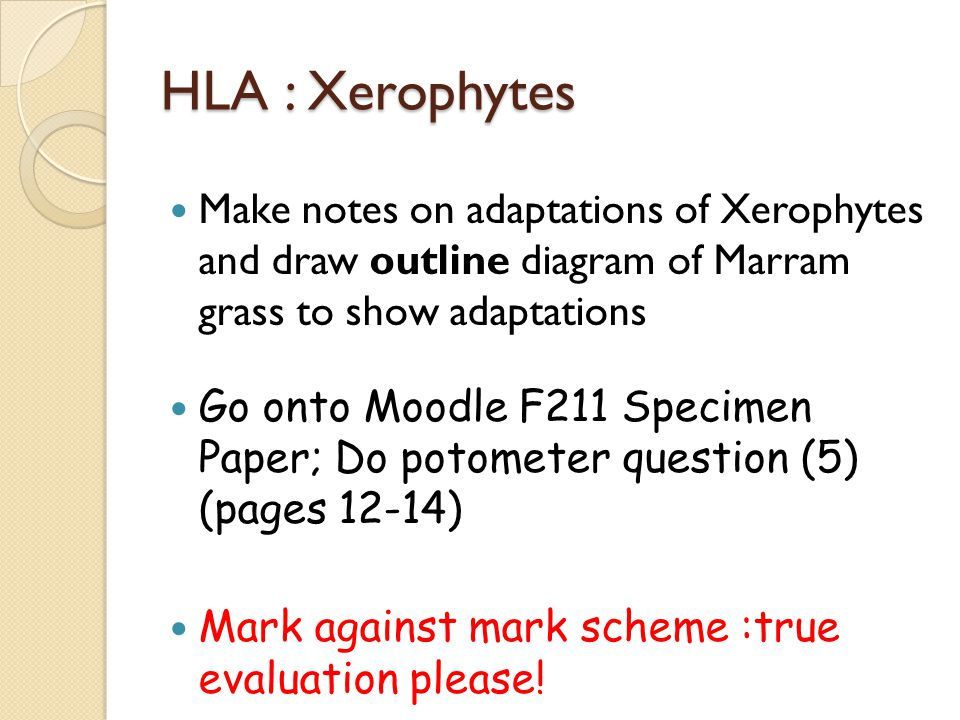 HLA : Xerophytes Make notes on adaptations of Xerophytes and draw outline diagram of Marram grass to show adaptations.