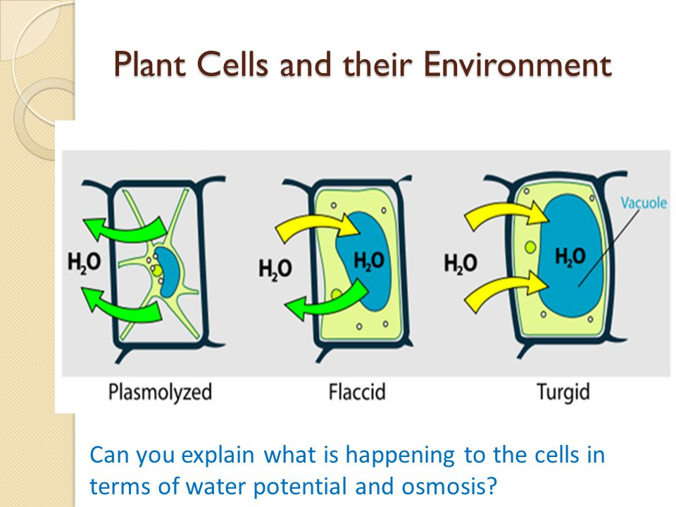 Plant Cells and their Environment