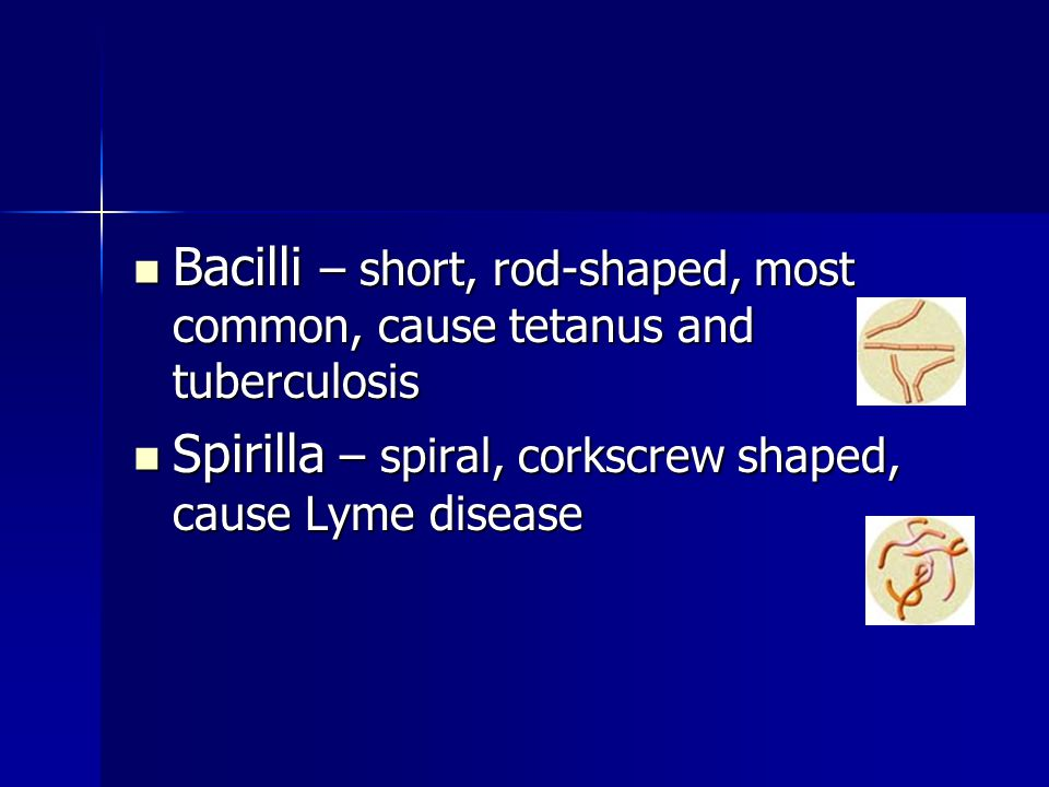 Bacilli – short, rod-shaped, most common, cause tetanus and tuberculosis