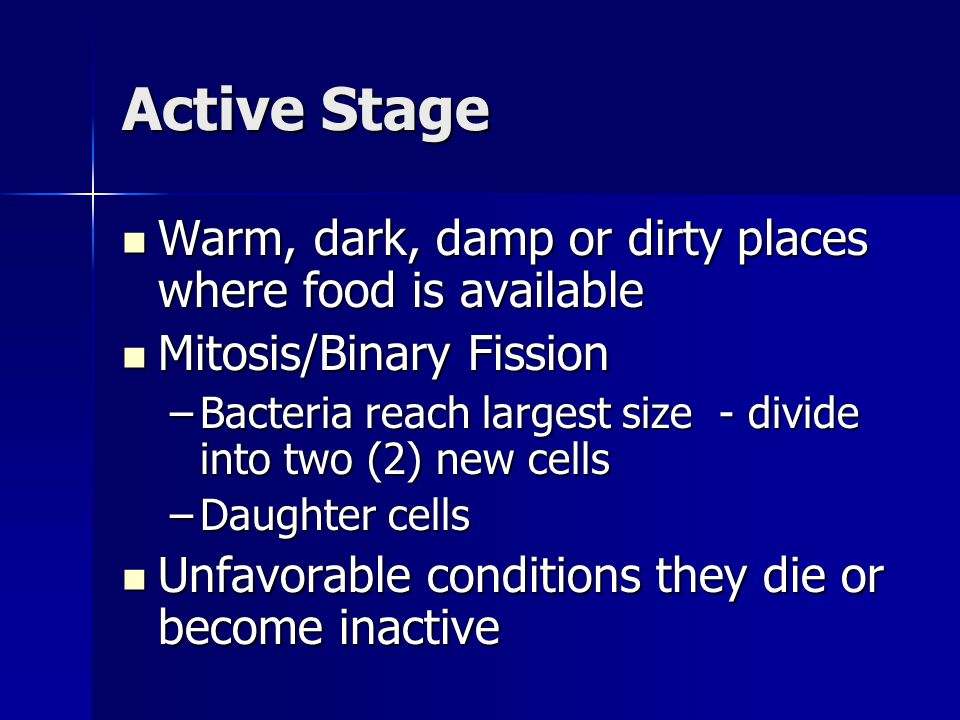 Active Stage Warm, dark, damp or dirty places where food is available