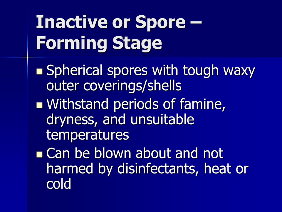 Inactive or Spore – Forming Stage