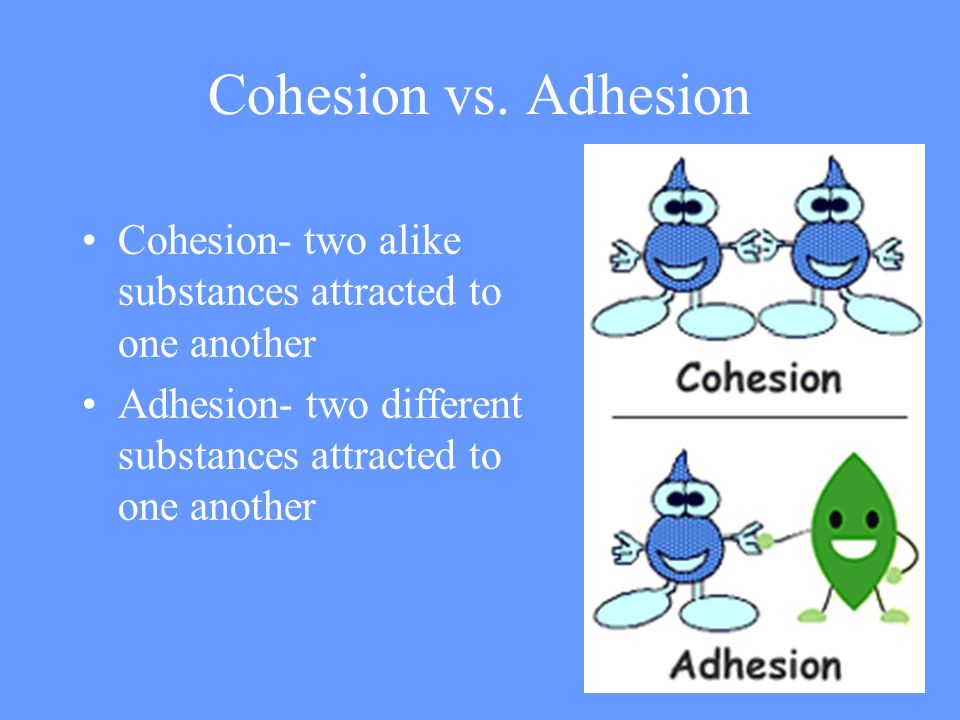 Cohesion vs. Adhesion Cohesion- two alike substances attracted to one another.