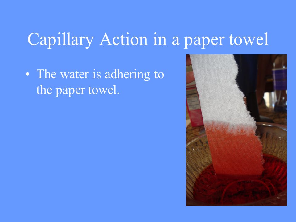 Capillary Action in a paper towel