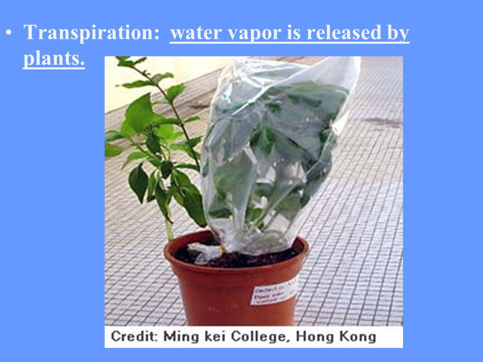 Transpiration: water vapor is released by plants.