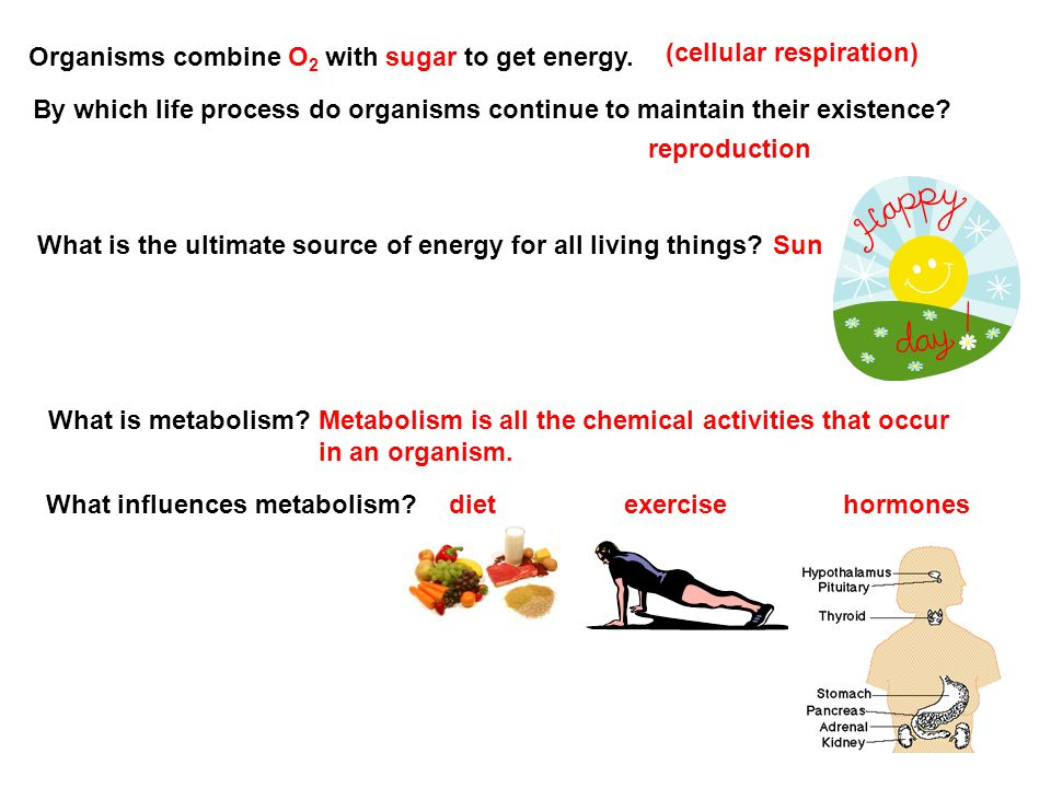 Organisms combine O2 with sugar to get energy.