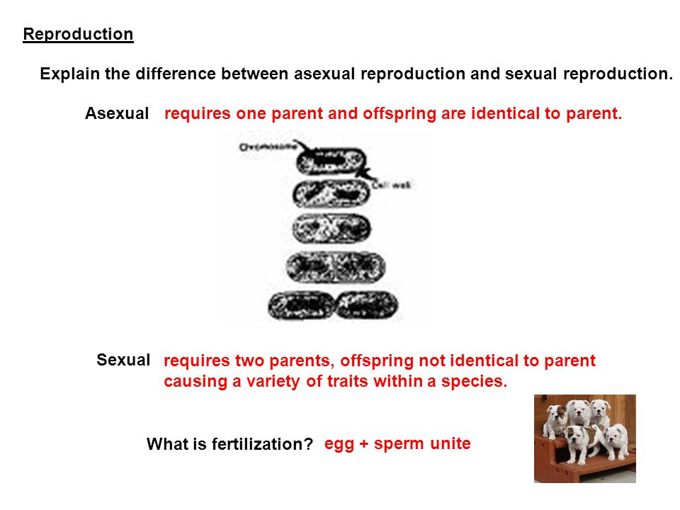Reproduction Explain the difference between asexual reproduction and sexual reproduction. Asexual.
