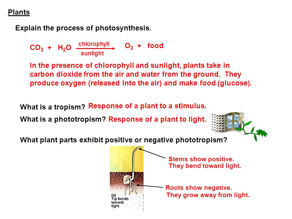 Explain the process of photosynthesis.