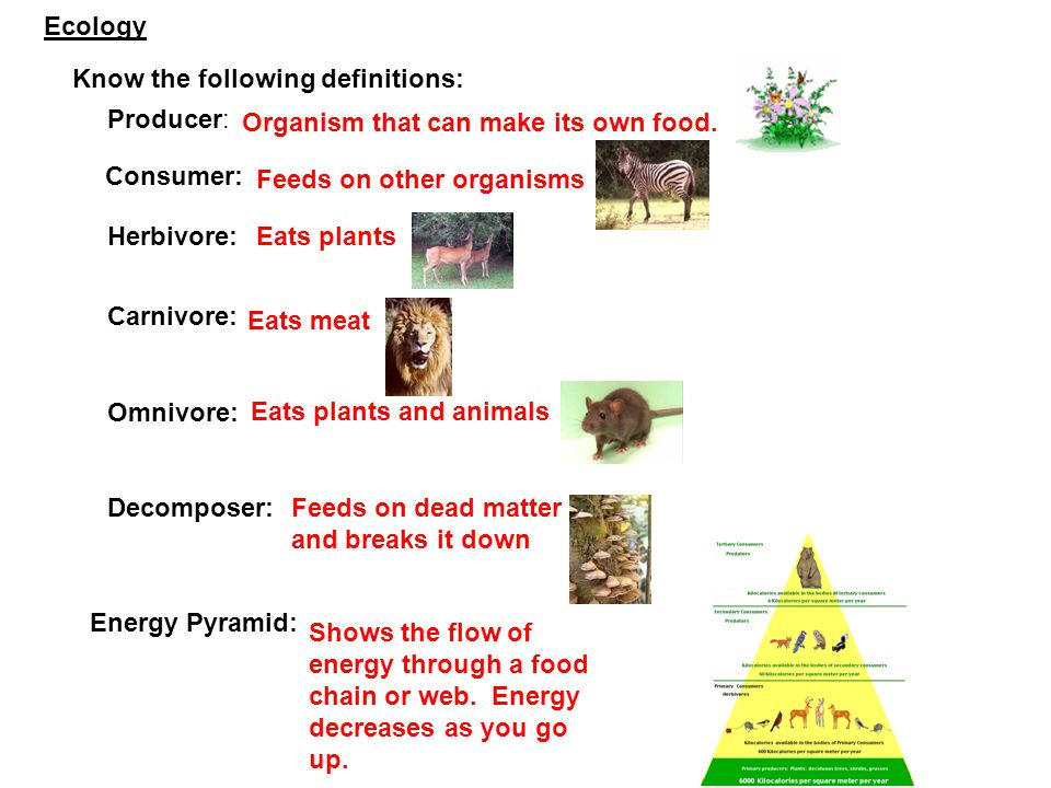 Ecology Know the following definitions: Producer: Organism that can make its own food. Consumer: