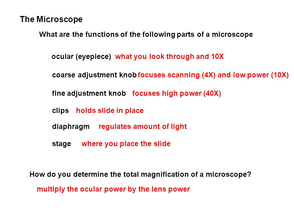The Microscope What are the functions of the following parts of a microscope. ocular (eyepiece) what you look through and 10X.