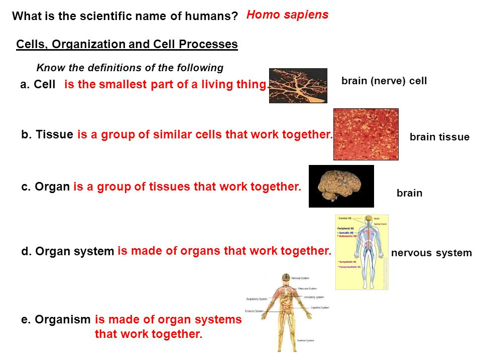 What is the scientific name of humans Homo sapiens