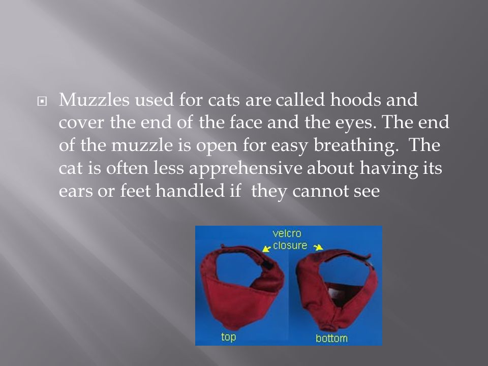 Muzzles used for cats are called hoods and cover the end of the face and the eyes.