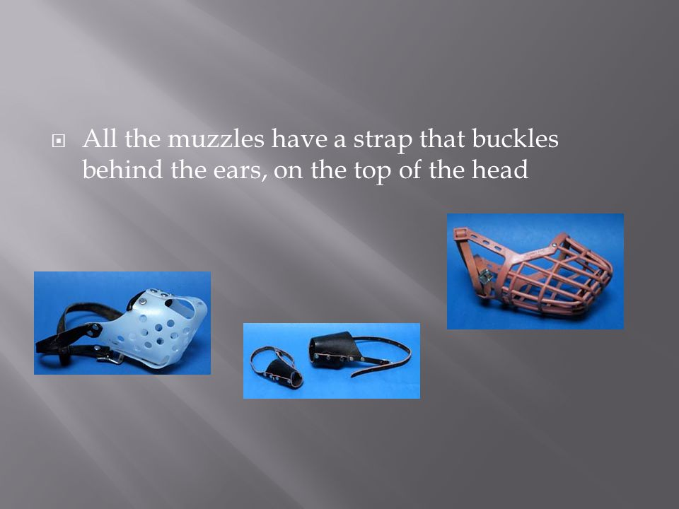 All the muzzles have a strap that buckles behind the ears, on the top of the head