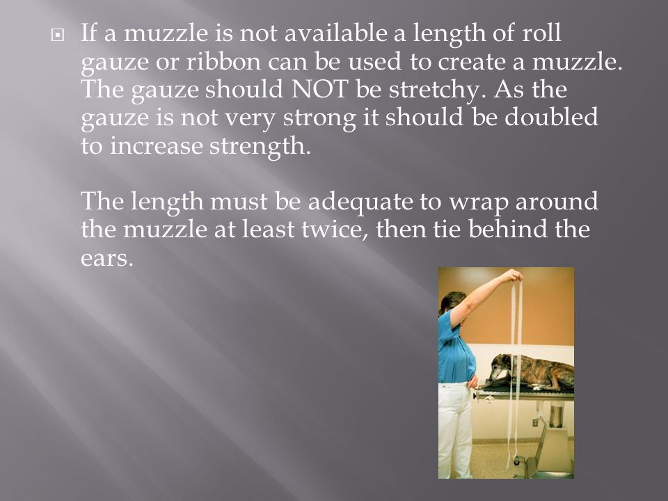 If a muzzle is not available a length of roll gauze or ribbon can be used to create a muzzle.