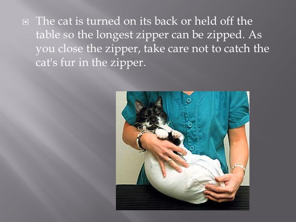 The cat is turned on its back or held off the table so the longest zipper can be zipped.